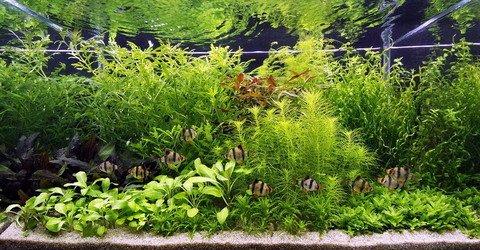 Unterwasser-Landschaft Holland-Aquarium für EIN 200 Liter Aquarium