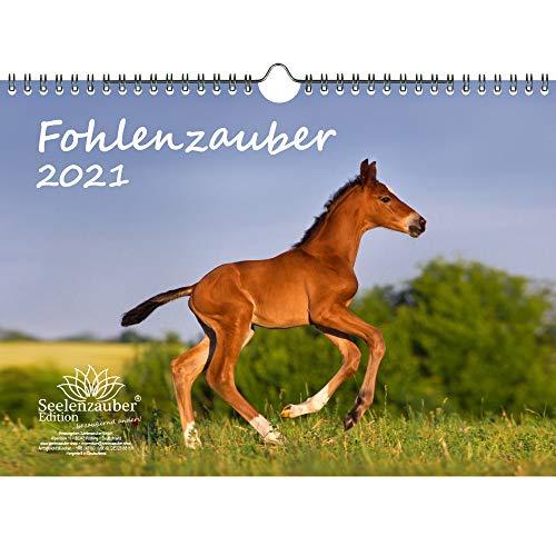 Fohlenzauber DIN A4 Kalender für 2021 Pferde und Fohlen - Geschenkset Inhalt: 1x Kalender, 1x Weihnachts- und 1x Grußkarte (insgesamt 3 Teile)