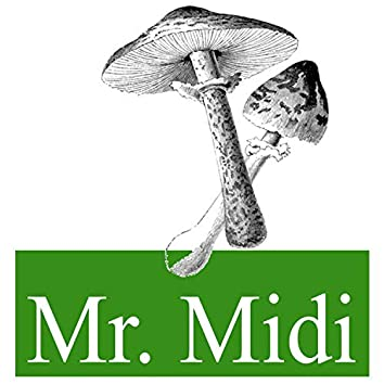 Mr Midi