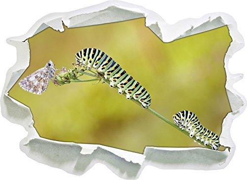chenilles machaon et Mites sur la Tige, Papier 3D Sticker Mural Taille: 92x67 cm décoration Murale 3D Stickers muraux Stickers