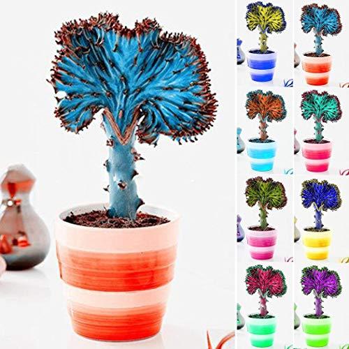 AIMADO Samen-100 Pcs Rarität Kaktus Samen bonsai exotic-samen mischung Pflegeleicht Saatgut ideal als zimmerpflanzen