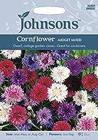 英国ミスターフォザーギルズシード&ジョンソンシード Patio Flowers Cornflower Midget Mixed パティオ・フラワーズ・コーンフラワー・ミジェット・ミックス