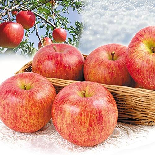 国華園 秋田産 蔵出しふじ 10�s 1組 りんご