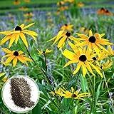 1000 semillas de Rudbeckia Hirta, semillas de flores para plantar (estilo 12)