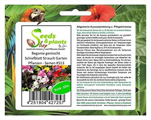 Stk - 100x Begonie gemischt Schiefblatt Strauch Garten Pflanzen - Samen KS13 - Seeds Plants Shop Samenbank Pfullingen Patrik Ipsa