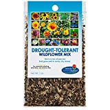 Drought Resistant Tolerant Wildflower Seeds Open-Pollinated Bulk Flower Seed Mix for Beautiful Perennial, Annual Garden Flowers - No Fillers - 1 oz Packet