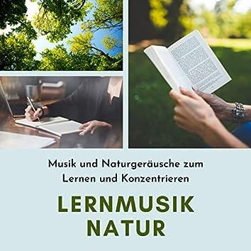 Lernmusik Natur – Musik und Naturgeräusche zum Lernen und Konzentrieren