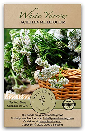 Gaea's Blessing Seeds - White Yarrow Seeds (1000 Seeds) with Easy to...
