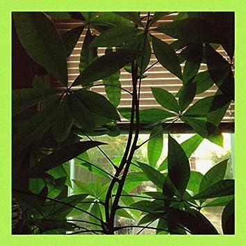 Plant Room
