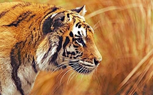 para Niños Adulto Juguete Regalo Puzzle Tigre De Bengala Rompecabezas De Bricolaje Juego De 1000 Piezas