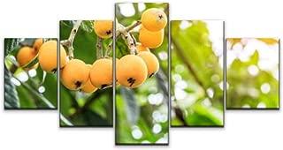 Best loquat fruit tree pictures Reviews