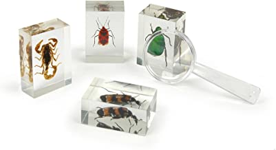 Geoworld Bug's World Collection of 10 Real Insects