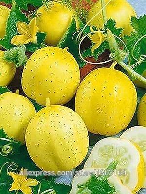 SVI 2016 New organiques de l'héritage de citron Pepino Graines – Graines végétales 50pcs
