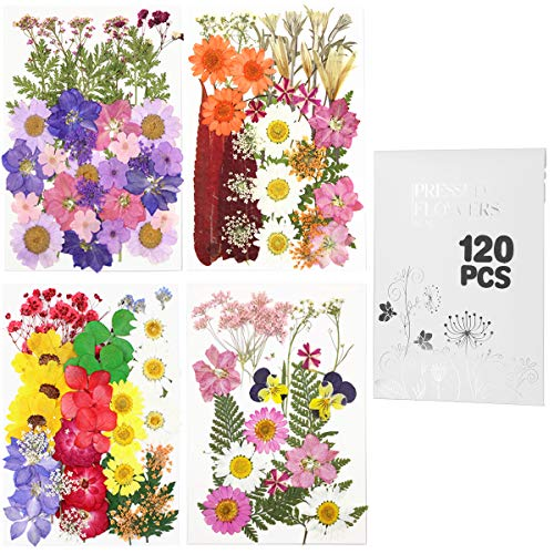 120pcs Real Dried Pressed Flowers Leaves Petals for Crafts, Colorful Pressed Flowers Daisies for Candle Jewelry Nail Pendant Crafts Making , Dried Flowers for Resin Art Floral Decors