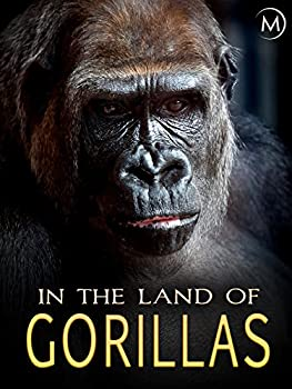 In the Land of Gorillas