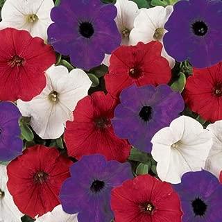 Petunia Easy Wave Flag Mix Pelleted Flower Seed 100 Seeds