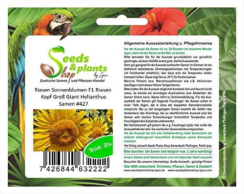 Premier Seeds Direct 427 Lot de 20 graines de tournesol géant F1 Giant Helianthus