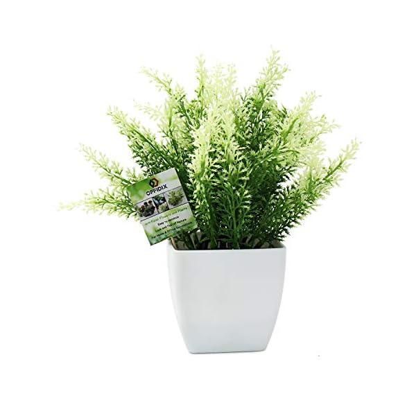 OFFIDIX Fake Plant Plastic Green Plant con jarrón Cuadrado, Home Faux Plastic Plants para el hogar, jardín, Oficina…