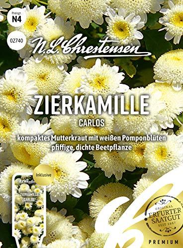 Zierkamille Carlos, kompaktes Mutterkraut mit weißen Pomponblüten, Samen