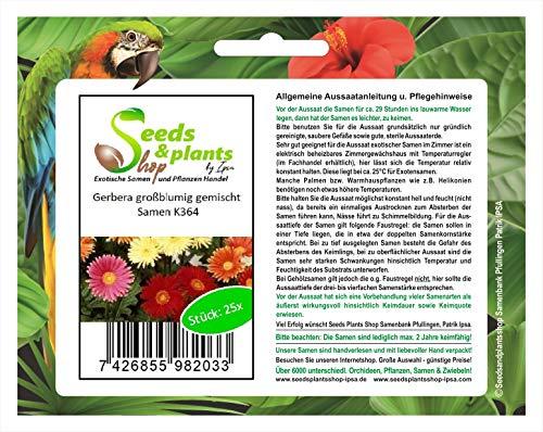 Stk - 25x Gerbera großblumig gemischt-Samen Blume Garten Pflanze Saatgut K364 - Seeds Plants Shop Samenbank Pfullingen Patrik Ipsa