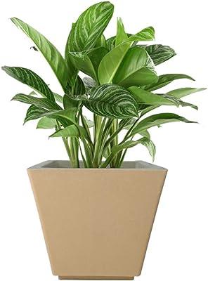 YUCCABE FOXB GK Beige 12 Inches Planter