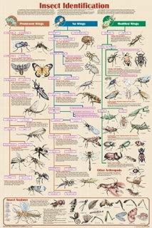 Feenixx Insect Identification Poster