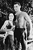 Mini-Poster Tarzan und His Mate Johnny Weissmuller, 28 x 43