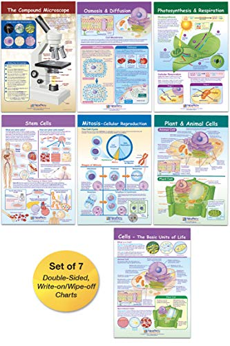 "NewPath Learning Cells Bulletin Board Charts: 7 Double-Sided, Laminated Science Charts Cover Compound Microscope; Cells; Mitosis; Osmosis & Diffusion; Comparing Plants & Animals; Photosynthesis & Respiration; Stem Cells – Feature Reference Information & ""Write-On, Wipe-Off"" Activities for Use in the Classroom, At-Home Study, Home Schools"