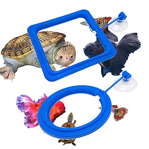 Turtle Eating Fish Food