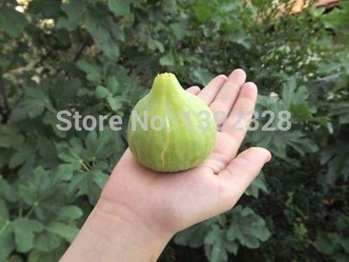 CHAUD! 30pcs 100% authentique fraîches rares Ficus carica Fig arbres fruitiers Graines (F30-10)