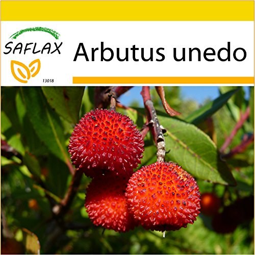 // Samen Duftpflanzen-Sortiment Lebkuchenbaum Schokoladenblume Lampionblume ..