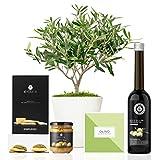 Lote Gourmet Regalo Delicias con árbol olivo natural 38 cm en maceta de 16 cm diámetro, guía de cuidados, aceite de oliva virgen extra, crema de aceitunas y regañás entregado en caja de regalo