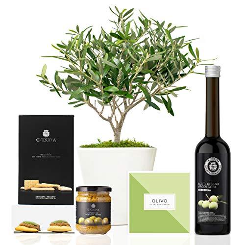 Lote Gourmet Regalo Delicias con árbol olivo prebonsai 38 cm maceta de 16 cm diámetro, guía de cuidados, aceite de oliva virgen extra, crema de aceitunas y regañás entregado en caja de regalo