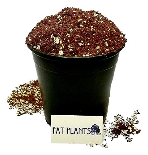 Fat Plants San Diego Premium Organic Cacti and Succulent Soil with 8 Months of Time-Released Nutrients