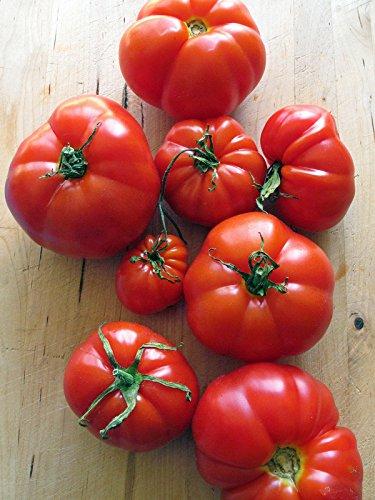 Französische Fleischtomate 'Marmande' (Solanum lycopersicum) 30 Samen alte Sorte