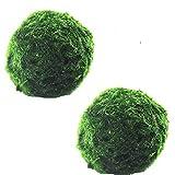 KSSPNL 2 Piezas (4 Cm / 1,57 Pulgadas) Marimo Moss Balls Live - Bolas De Musgo Verde Natural Purificación De Agua Peces Decorativos Tanque De Camarones Adorno De Plantas Acuáticas