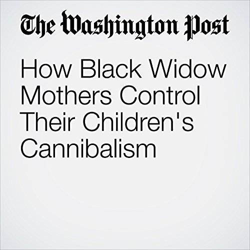 How Black Widow Mothers Control Their Children's Cannibalism cover art