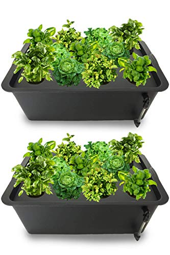 DWC Hydroponics Growing System - Medium Size Kit w/Airstone, Bucket, Air Pump, Rockwool - Best Indoor Herb Garden for Cilantro, Mint - Complete Hydroponic Setup (15% Off 2Pack 8 Black)