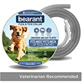 Best Flea And Tick Prevention For Dogs - Bearant Flea and Tick Collar - All Natural Review