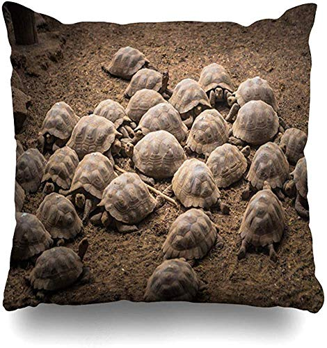 New-WWorld-Shop Throw Case Darwin Altes Riesenland Schildkröten Isabela Island Langsamkeit Galapagos Amerika Natur Archipel Camp