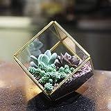 Kimdio Geometric Terrarium Clear Glass Tabletop Planter Air Plant Holder Display for Succulent Fern Moss Air Plants Holder Miniature Outdoor Fairy Garden DIY Gift (Gold-M)