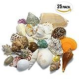 【エデンの貝殻】海の贈り物 ワクワク いろんな大きな貝殻 スペシャル 詰め合わせ どっさり 約480g 25個セット [S-13]