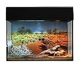 Lucky Reptile Starter Kit 50 cm Geco del Deserto, Nero Set Completo terrario per Piccoli gechi
