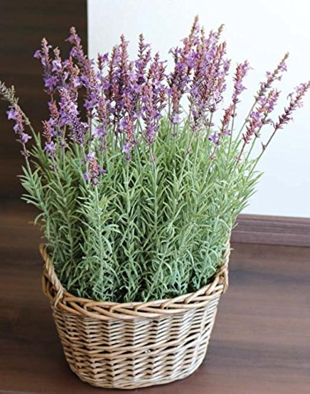 PLANT&STYLE Künstlicher Lavendel im Korb, 55cm