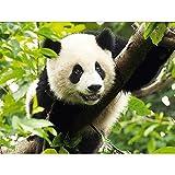 Decoración del hogar Diy 5D Diamante Bordado'Panda' Punto de cruz Set Pintura al óleo Resina Hobby Craft 40 * 60Cm