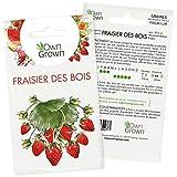Graines de fraises : Semences de plant de fraise pour environ 50 plants à semer -...