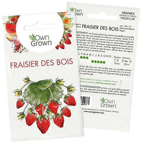 Graines de fraises : Semences de plant de fraise pour environ 50 plants à semer - Graines potager de fraise pour jardin - Graine de pied de fraisier à planter de qualité supérieure par OwnGrown