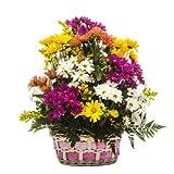 Florclick - Cesta Margaritas- Ramo de flores naturales en 24 horas y envío GRATIS