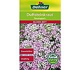 """Dehner Blumen-Saatgut, Duftsteinkraut """"Rosateppich"""", 5er Pack (5 x 0.7 g)"""