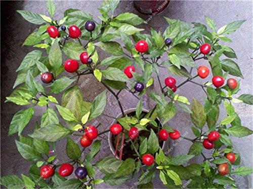 Cerise poivre Graines de légumes jardin Bonsai Chili usine Décoration non-Ogm Jardin Cuisine Assaisonnement Alimentation 200 Pcs 16